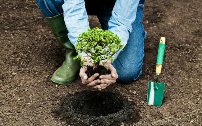 Plant a tree to help reduce air pollution